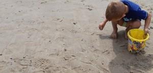 Principito recogiendo conchitas en la playa.