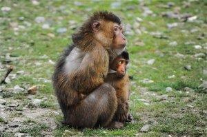 Madre y cría abrazados mostrando un apego seguro